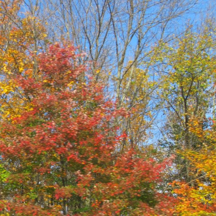 Autumn leaves in Walton NY